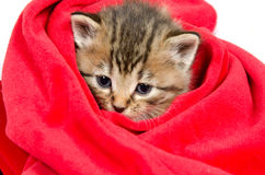 Cute tabby kitten Stock Images