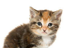 Cute tabby kitten Royalty Free Stock Photography