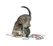 Cute tabby kitten with ball of yarn on white Royalty Free Stock Image