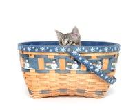 Cute tabby kitten in basket Royalty Free Stock Images