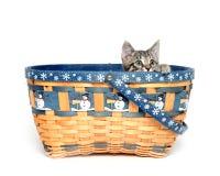 Cute tabby kitten in basket Stock Image
