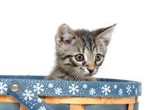 Cute tabby kitten in basket Royalty Free Stock Photos