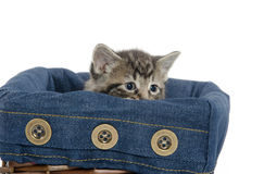 Cute tabby kitten in a basket Stock Images