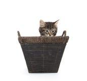 Cute tabby kitten in basket Stock Photos