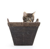 Cute tabby kitten in basket Royalty Free Stock Photography