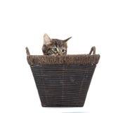 Cute tabby kitten in basket Stock Photography
