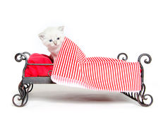 Cute tabby kitten in bed Royalty Free Stock Images