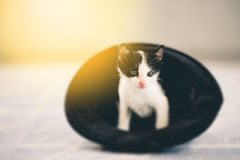 Cute tabby kitten. In a black hat Stock Images