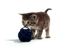 Cute tabby kitten with blue yarn Royalty Free Stock Photography