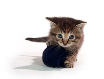 Cute tabby kitten with blue yarn Royalty Free Stock Images