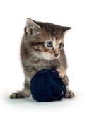 Cute tabby kitten with blue yarn Royalty Free Stock Photos