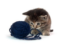 Cute tabby kitten with blue yarn Stock Photo