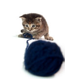 Cute tabby kitten with blue yarn Stock Photos