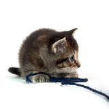 Cute tabby kitten with blue yarn Stock Images