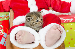 Cute tabby kitten in child's lap Stock Images