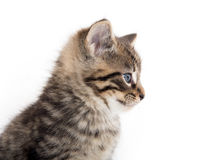 Cute tabby kitten crying on white Royalty Free Stock Photography