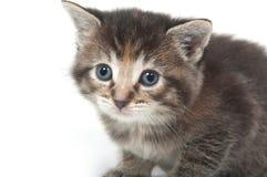 Cute tabby kitten face. Cute face of a tabby kitten on white Royalty Free Stock Image