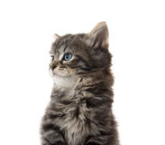 Cute tabby kitten face on white Royalty Free Stock Image