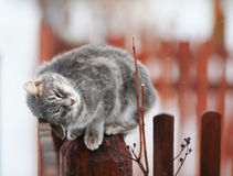 Cute tabby kitten fondled on a wooden fence in the spring Royalty Free Stock Images