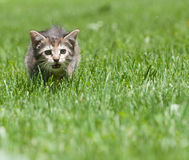 Cute tabby kitten in the grass Stock Images