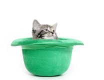 Cute tabby kitten in green hat Royalty Free Stock Photos