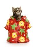 Cute tabby kitten in Hawaiian shirt Stock Photography