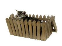Cute tabby kitten ina  basket Stock Image