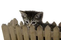 Cute tabby kitten ina  basket Stock Images