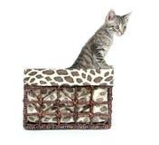 Cute tabby kitten inside of basket Stock Photo