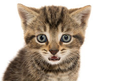 Cute tabby kitten ion white Royalty Free Stock Photography