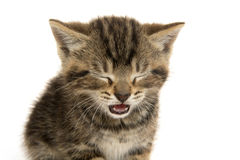 Cute tabby kitten ion white Stock Photography
