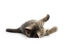 Cute tabby kitten on its back Royalty Free Stock Photos
