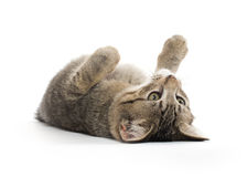 Cute tabby kitten on its back Stock Photo