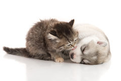 Cute tabby kitten kissing cute puppy  on white background Stock Photo