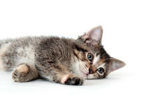 Cute tabby kitten laying down and playing Stock Photo