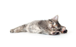Cute tabby kitten laying down and playing Royalty Free Stock Image