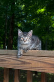 Cute tabby kitten laying on wooden railing Stock Photography