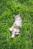Cute tabby kitten lying Royalty Free Stock Photography