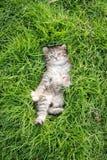 Cute tabby kitten lying Royalty Free Stock Photography