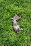 Cute tabby kitten lying Stock Photos