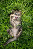Cute tabby kitten lying. On green grass Royalty Free Stock Photos