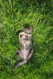 Cute tabby kitten lying Stock Photo