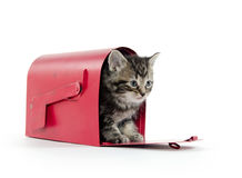 Cute tabby kitten in mailbox Stock Images