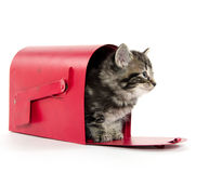 Cute tabby kitten in mailbox Royalty Free Stock Photo