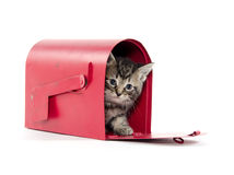 Cute tabby kitten in mailbox Stock Image