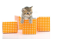 Cute tabby kitten in orange polka dot box on white background Stock Photo