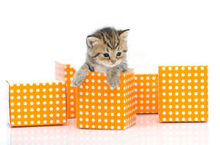 Cute tabby kitten in orange polka dot box on white background Royalty Free Stock Image