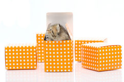 Cute tabby kitten in orange polka dot box on white background Royalty Free Stock Images