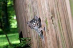 Cute tabby kitten peeking through a fence Royalty Free Stock Photography