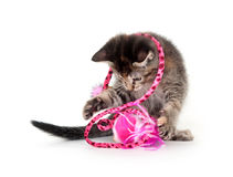 Cute tabby kitten with pink toy Stock Photos
